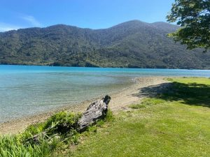 Forest Bathing experience on The Marlborough Sounds